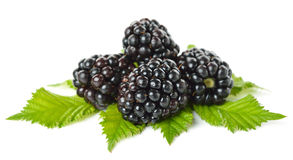 Blackberries isolated on white background Stock Images