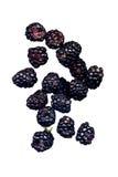 Blackberries Isolated on White Stock Image