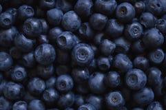 Blackberries. Large amount of black berries forming almost uniform background stock image