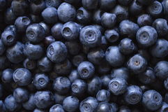 Blackberries. Large amount of black berries forming almost uniform background stock images