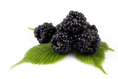 Blackberries with leaf Royalty Free Stock Photos