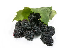 Blackberries in leaf Royalty Free Stock Image