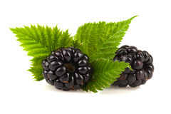 Blackberries with leaf. Stock Photography