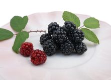 Blackberries and leaves. Blackberries black and red on a pink plate on white background stock photos