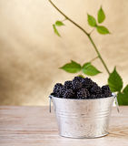 Blackberries with leaves on golden background Royalty Free Stock Images
