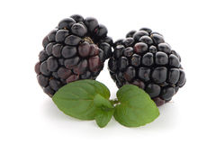 Blackberries with leaves Stock Image