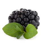 Blackberries with leaves Stock Photo