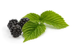 Blackberries and leaves of raspberry on white background Stock Photos