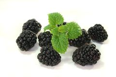Blackberries with lemon balm Royalty Free Stock Photo