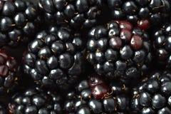 Blackberries macro background. Fresh blackberries background - macro photography Royalty Free Stock Photo