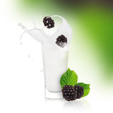 Blackberries with milk splash. Over white Stock Photos