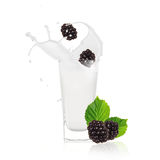 Blackberries with milk splash Stock Photos
