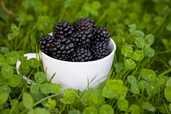 Blackberries in a mug Stock Photography