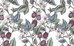 Blackberries pattern Stock Photography