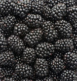 Blackberries photographed in the studio Royalty Free Stock Images