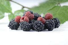 Blackberries and Raspberries Stock Photography