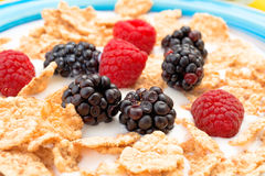 Blackberries and raspberries in bowl of cereal with milk Stock Photography