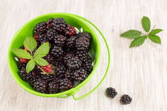 Blackberries and raspberries in a green bucket Royalty Free Stock Photos