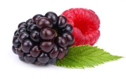 Blackberries with raspberries and green leaf isolated on white background. macro Stock Photography