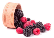 Blackberries and raspberries spilled from wooden bowl isolated on white background Stock Photos