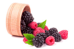 Blackberries and raspberries spilled from wooden bowl isolated on white background Royalty Free Stock Images