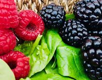 Blackberries, raspberries and spinach in the foreground. royalty free stock image