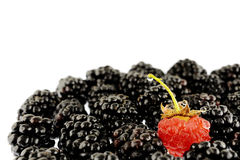 Blackberries & Raspberry Royalty Free Stock Image