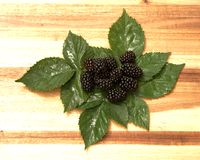 Blackberries / Rubus fruticosus. Closeup of some blackberries with leaves on a wooden board Stock Photography