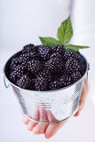 Blackberries in a small bucket Royalty Free Stock Photography