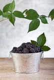 Blackberries in small bucket Stock Photo