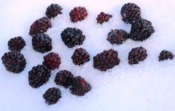 Blackberries in Snow. Closeup image of blackberries in snow Royalty Free Stock Image