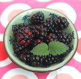Blackberries. Some blackberries in a bowl Stock Images