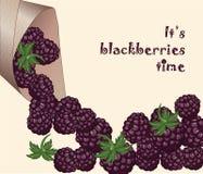 Blackberries time background Stock Photos