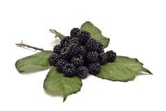 Blackberries VII Stock Photography