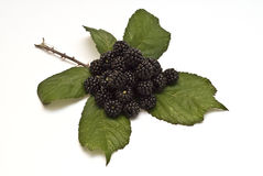 Blackberries VIII Stock Photos