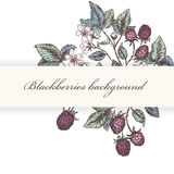 Blackberries 1. Vintage flower and berry background. Beautiful invitation card with blackberries Royalty Free Stock Photo