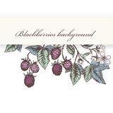 Blackberries 2. Vintage flower and berry background. Beautiful invitation card with blackberries Royalty Free Stock Image
