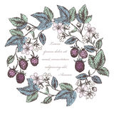 Blackberries 3. Vintage flower and berry background. Beautiful invitation card with blackberries wreath Royalty Free Stock Image