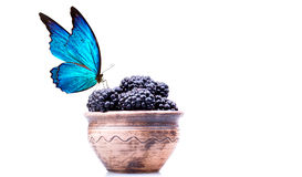 Blackberries with water drops and butterfly royalty free stock photography