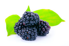 Blackberries on white Stock Photography