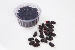 Blackberries. In the white background royalty free stock image