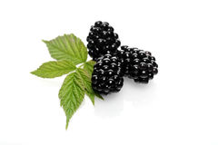 Blackberries on white background - studio shot Royalty Free Stock Images