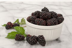Blackberries White Bowl Στοκ Φωτογραφία