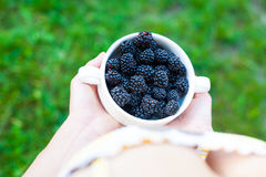 Blackberries in a white bowl. Stock Images