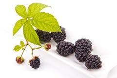 Blackberries on a white porcelain base. Blackberries on white porcelain base on a white background Stock Photography