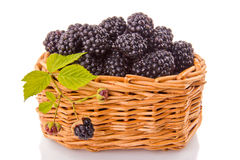 Blackberries in a wicker basket. Blackberries in a basket on a white background Stock Image