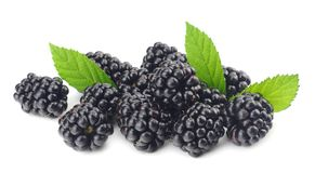 Free Blackberries With Green Leaf Isolated On White Background. Macro Royalty Free Stock Photo - 124994285
