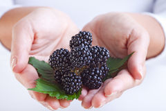 Blackberries in woman hands Stock Photo
