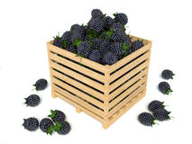 Blackberries in a wooden box on a white background Stock Images