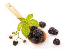Blackberries in a wooden spoon, side view. Blackberries in a wooden spoon on a white background Royalty Free Stock Photos